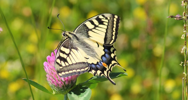 photograph-butterflies-1