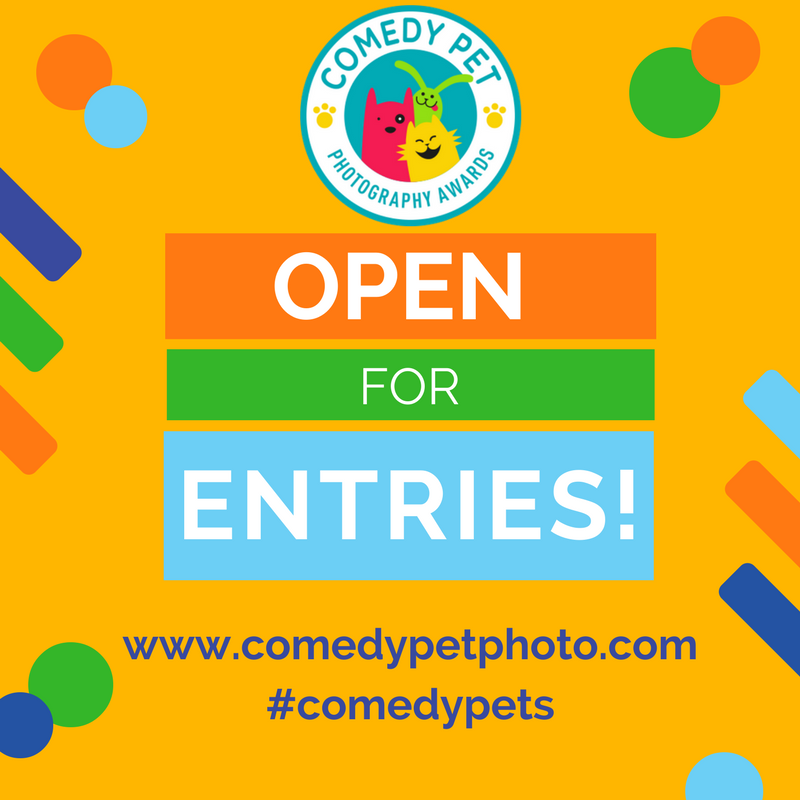 comedy-pet-photography-contest
